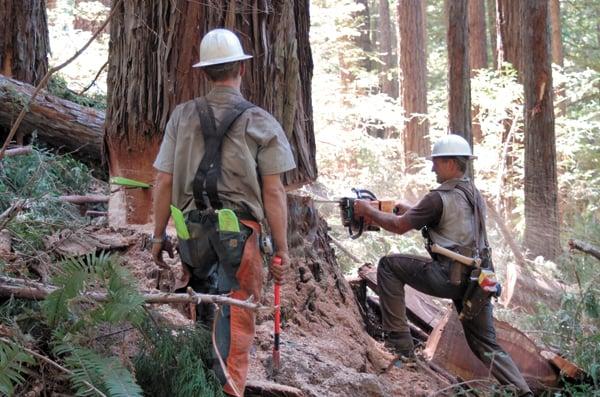 Big Creek Lumber timber fallers