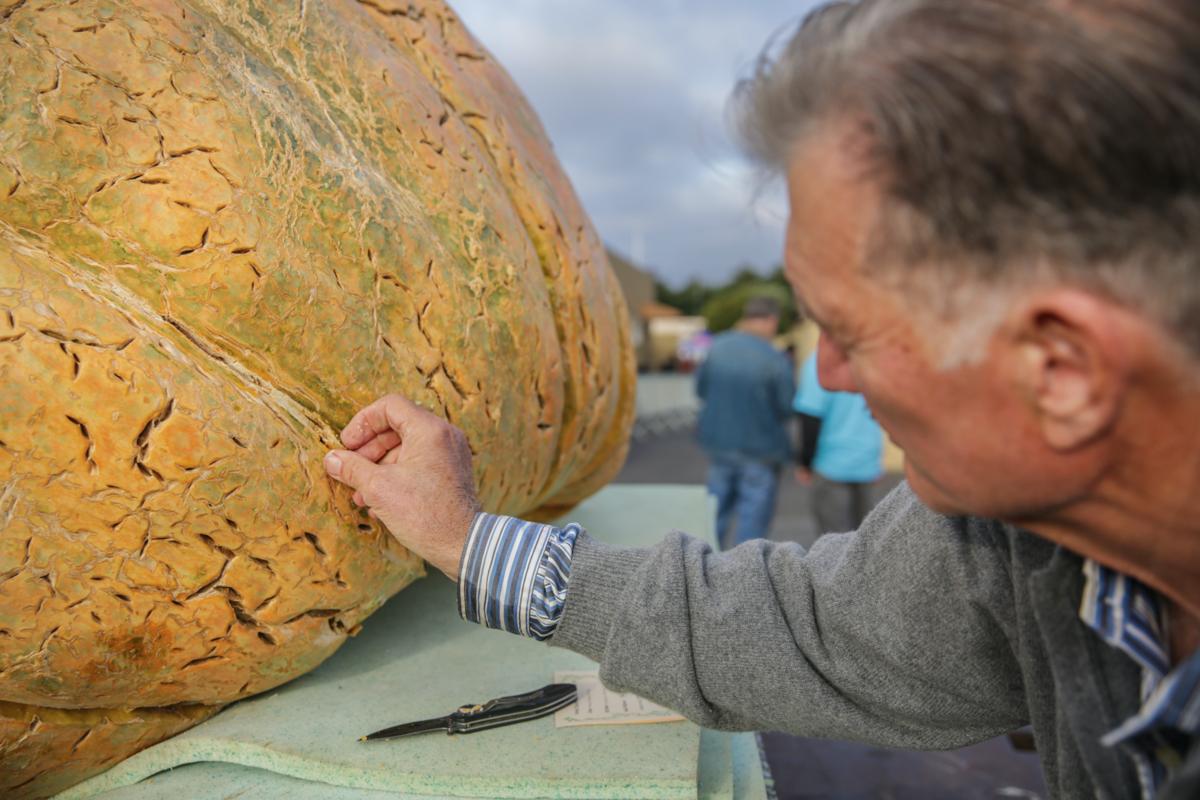 image-big pumpkin 08