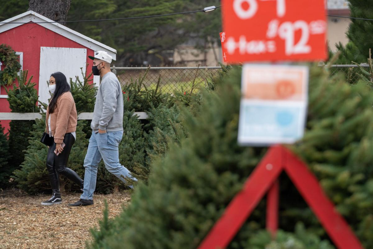 Couple searches for tree
