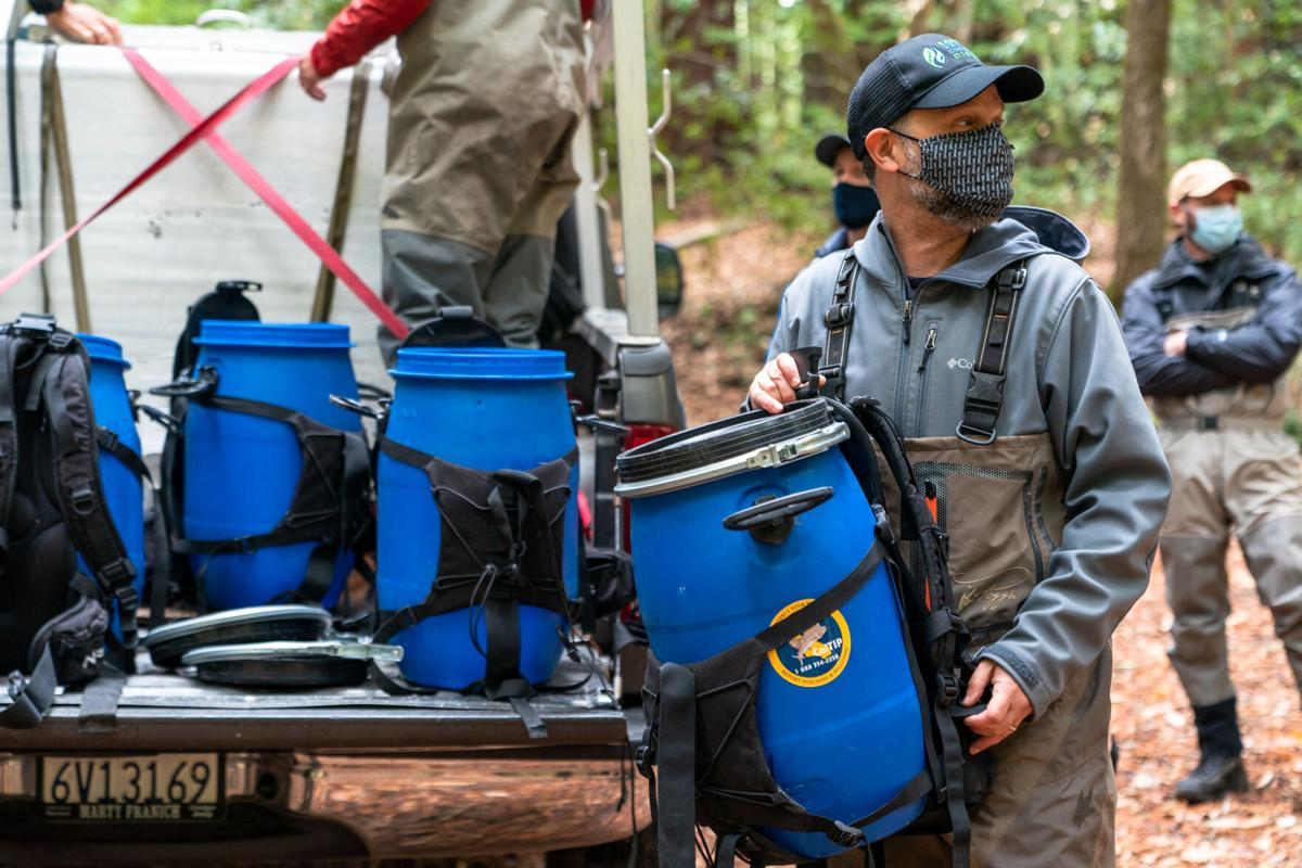 Coho Salmon Backpacks