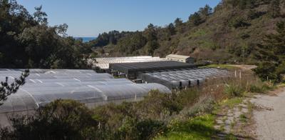 image-cannabis farm