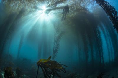 Underwater concerns