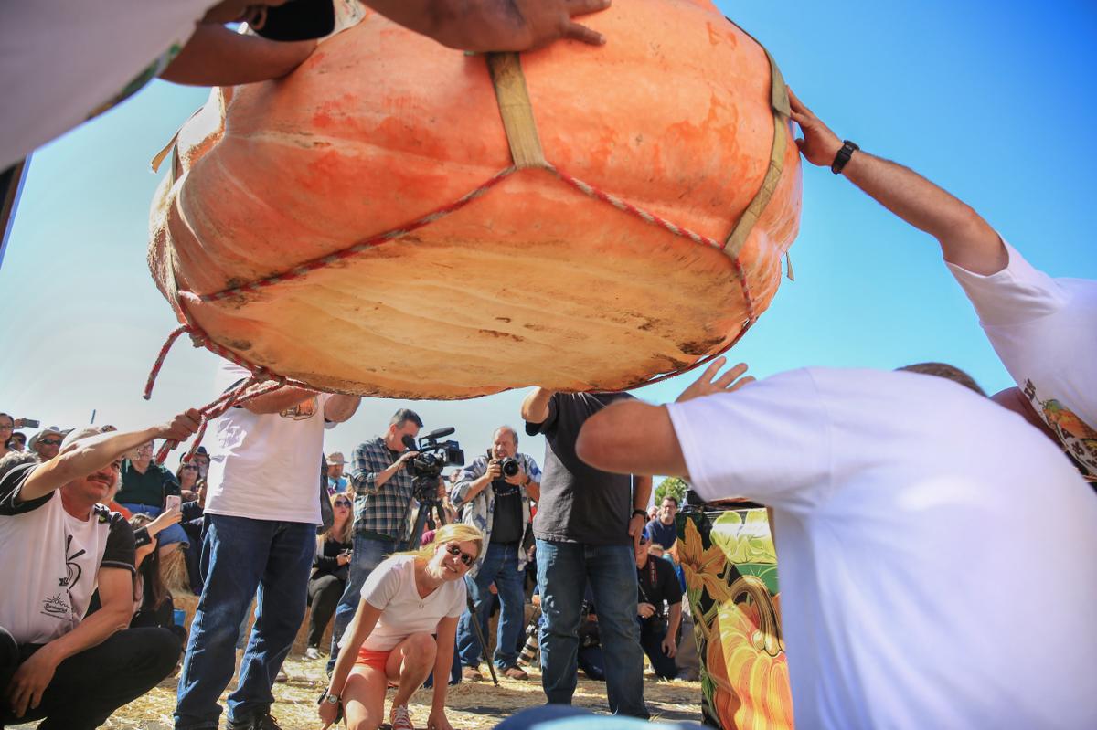 Image 2: Daletas becomes 4-time winner at HMB pumpkin weigh-off