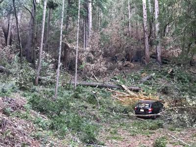 Loma Mar car tree