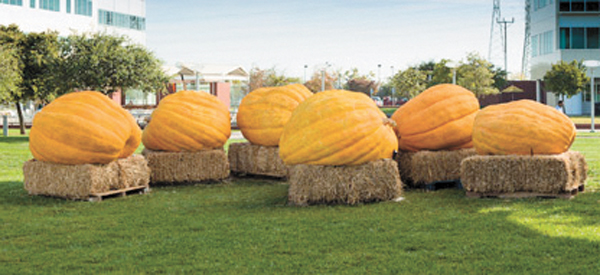 Google Pumpkins