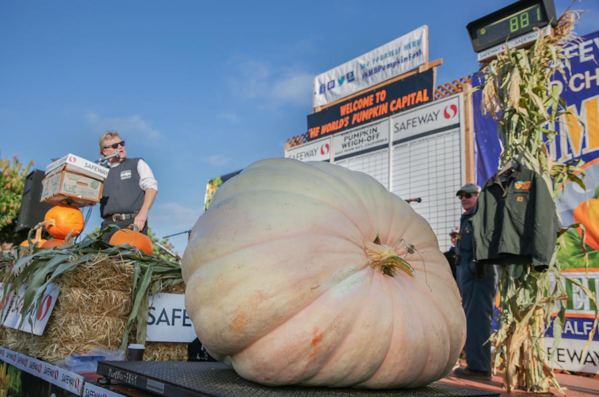 image-big pumpkin 09