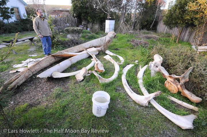 Leviathan bones land at local school