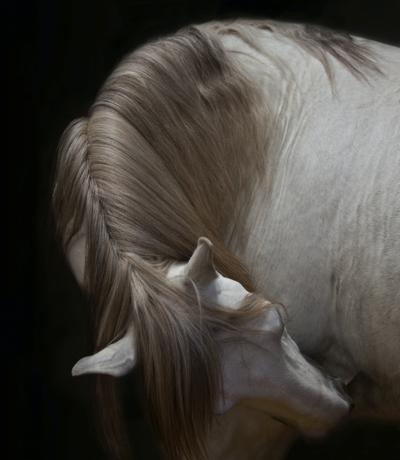 image- horse