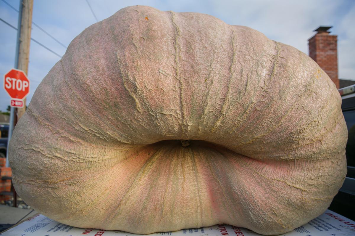 image-big pumpkin 03