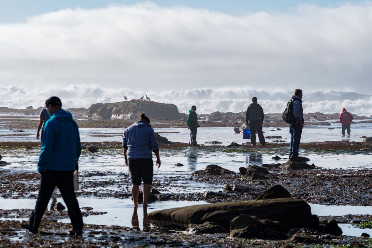 Many scavenge at Pillar Point Reef