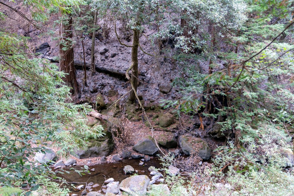 Pescadero Creek in Loma Mar