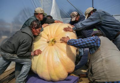 image-pumpkin cut