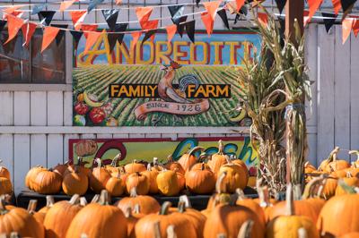 image-Andreotti farm
