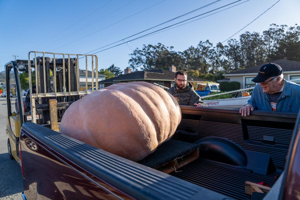 Vince Zurvino loads his pumpkin into his truck