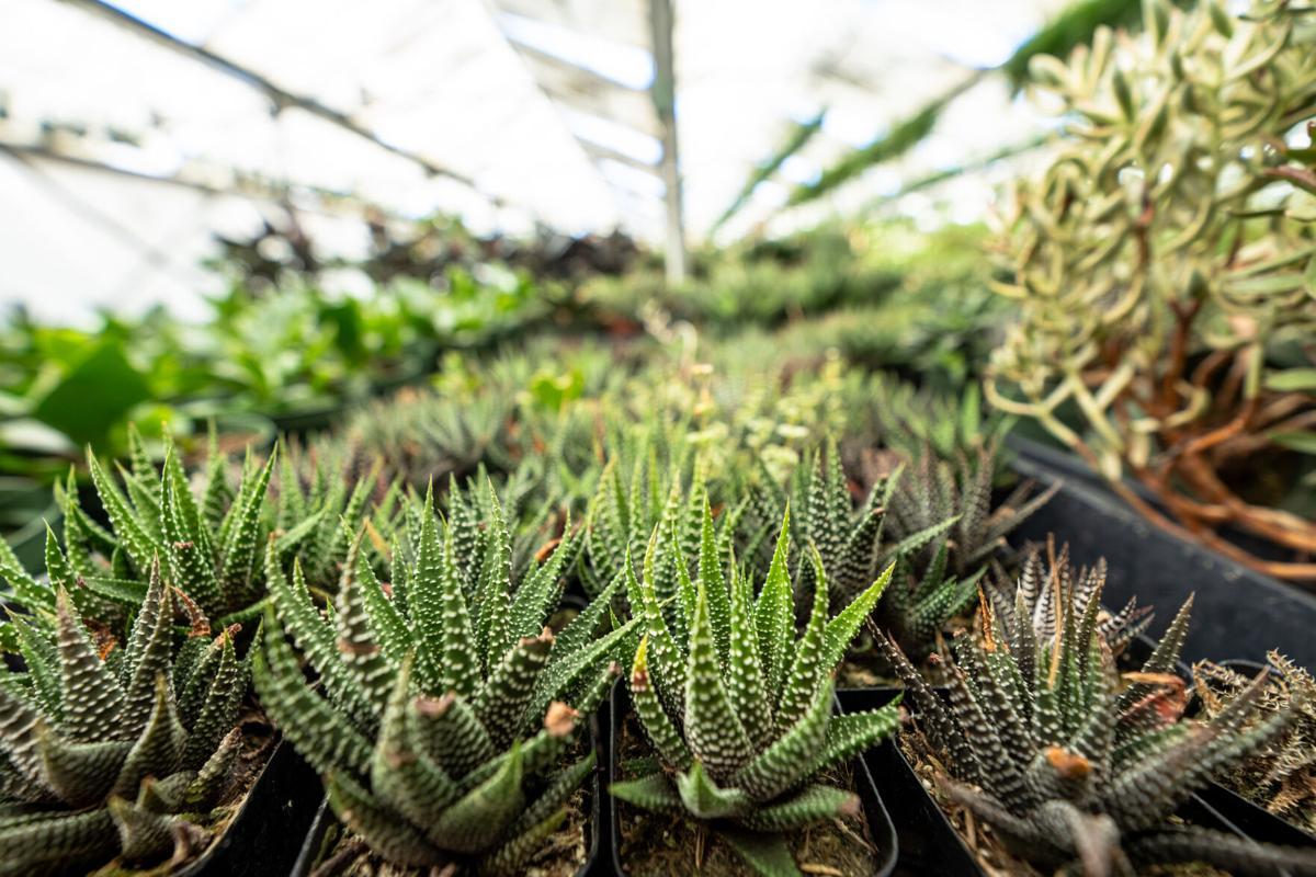 Rudy's Nursery Succulents
