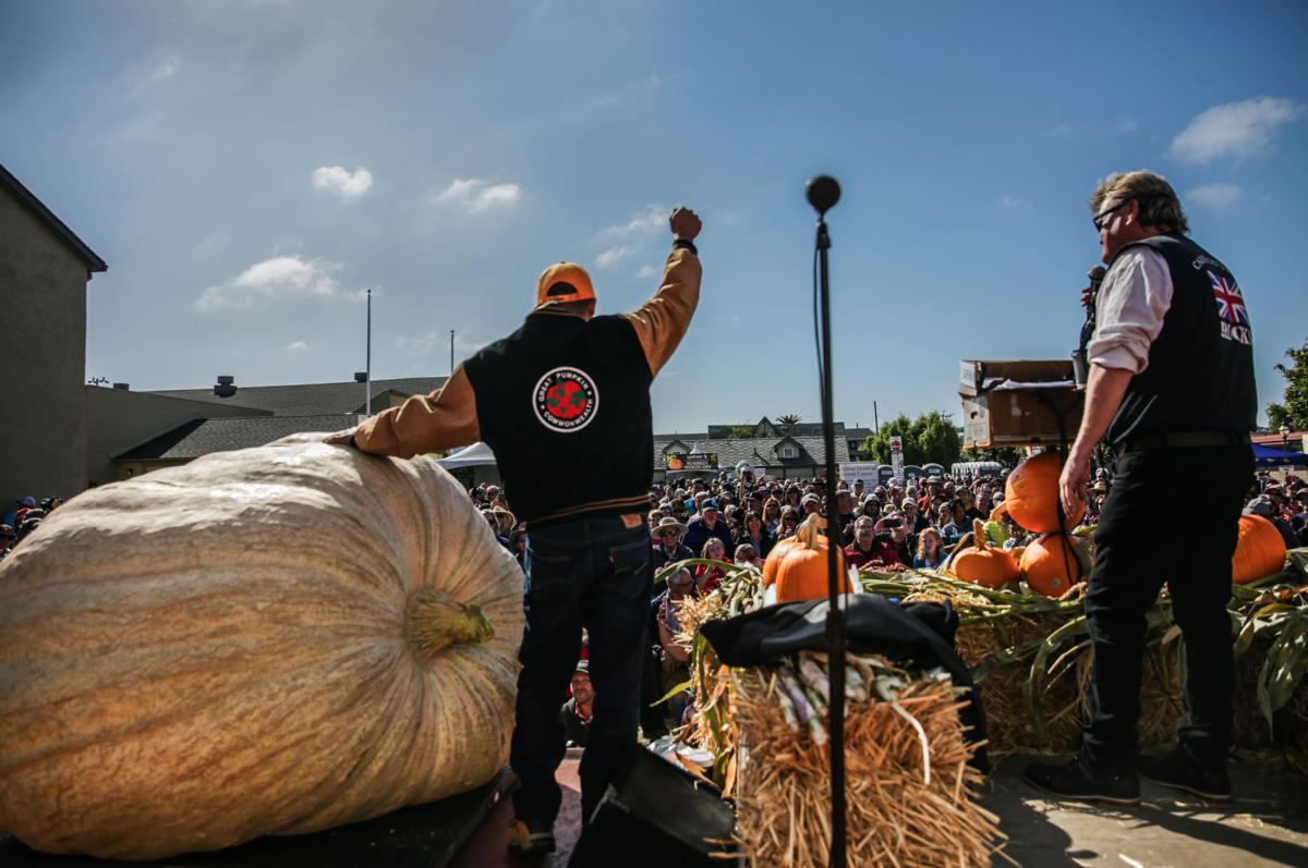 image-big pumpkin 04