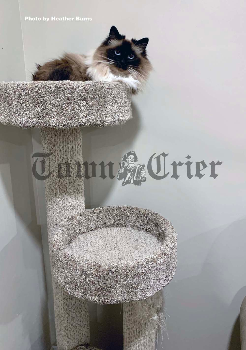 Add a cat tree or perch to help reduce stress and anxiety for cats