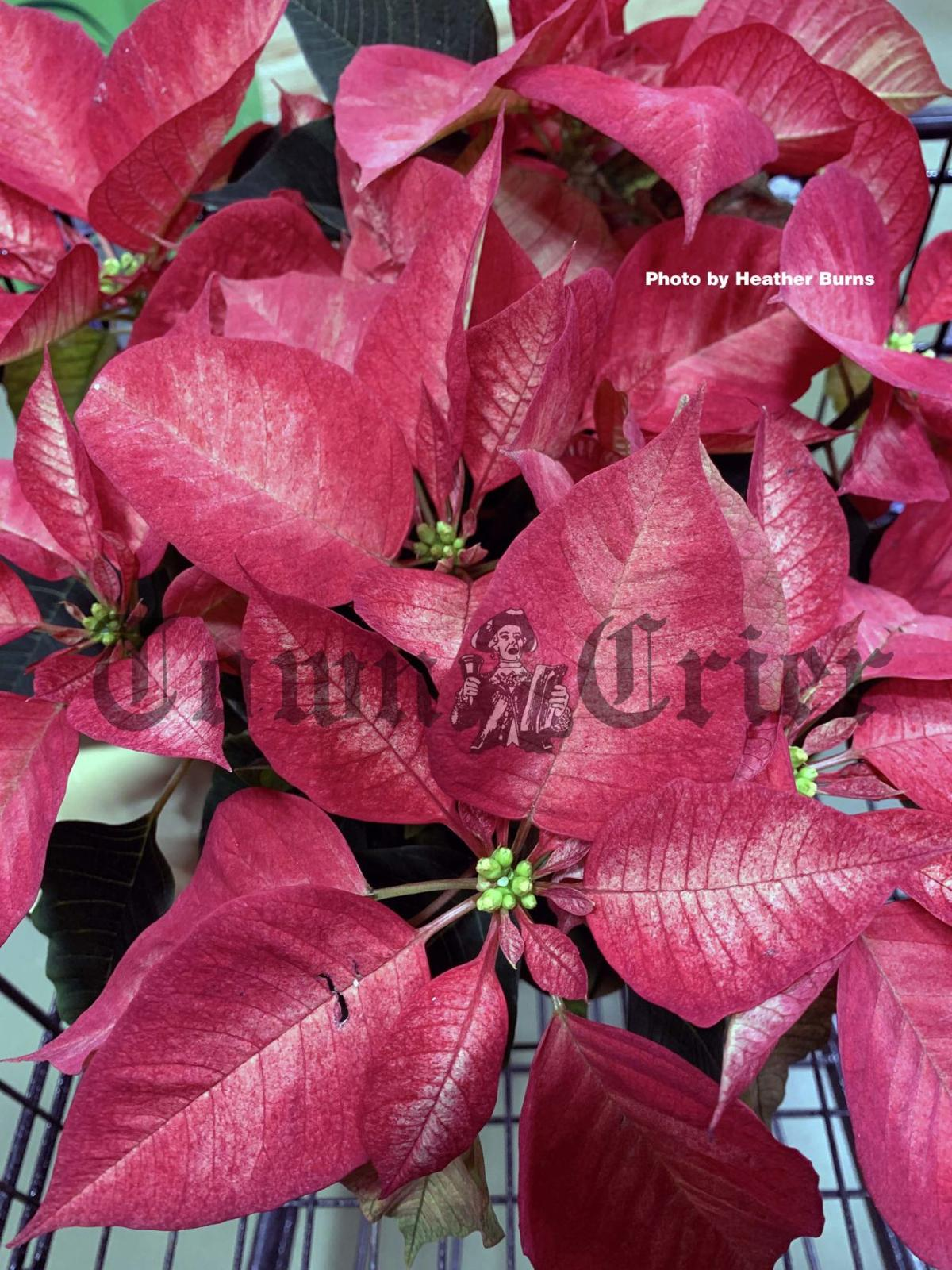 Some Plant Ideas To Brighten Up The Winter Months News