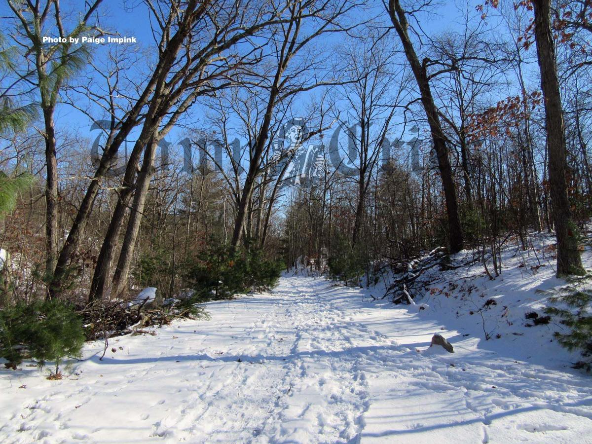 Trail at Lynn Woods