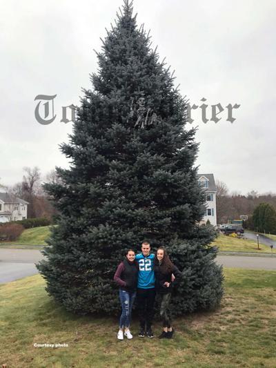 Tewksbury spruce donated to City of Everett