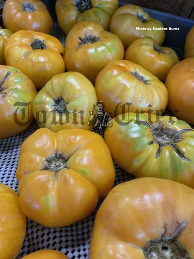 Brandywine Yellow Tomatoes