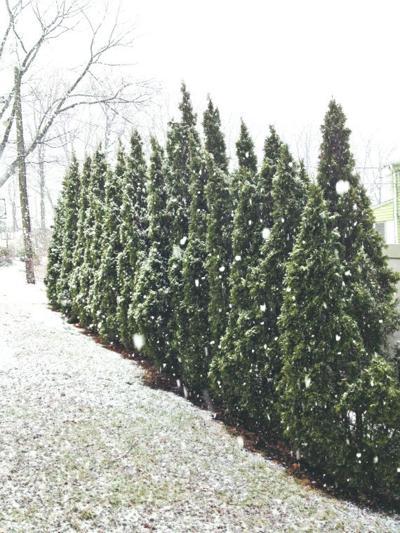 A surprise snowstorm