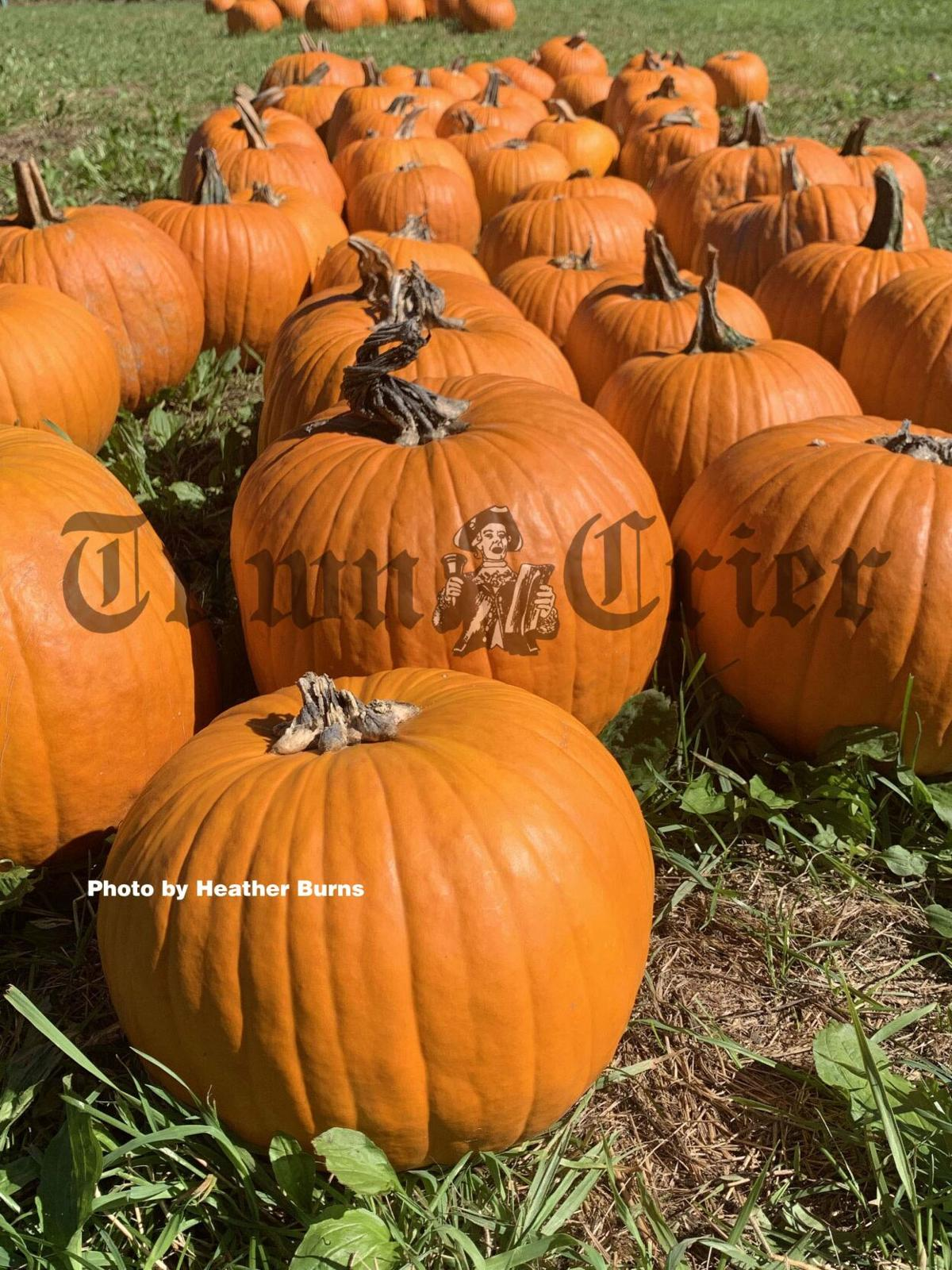 Krochmal Farms annual Pumpkin Festival