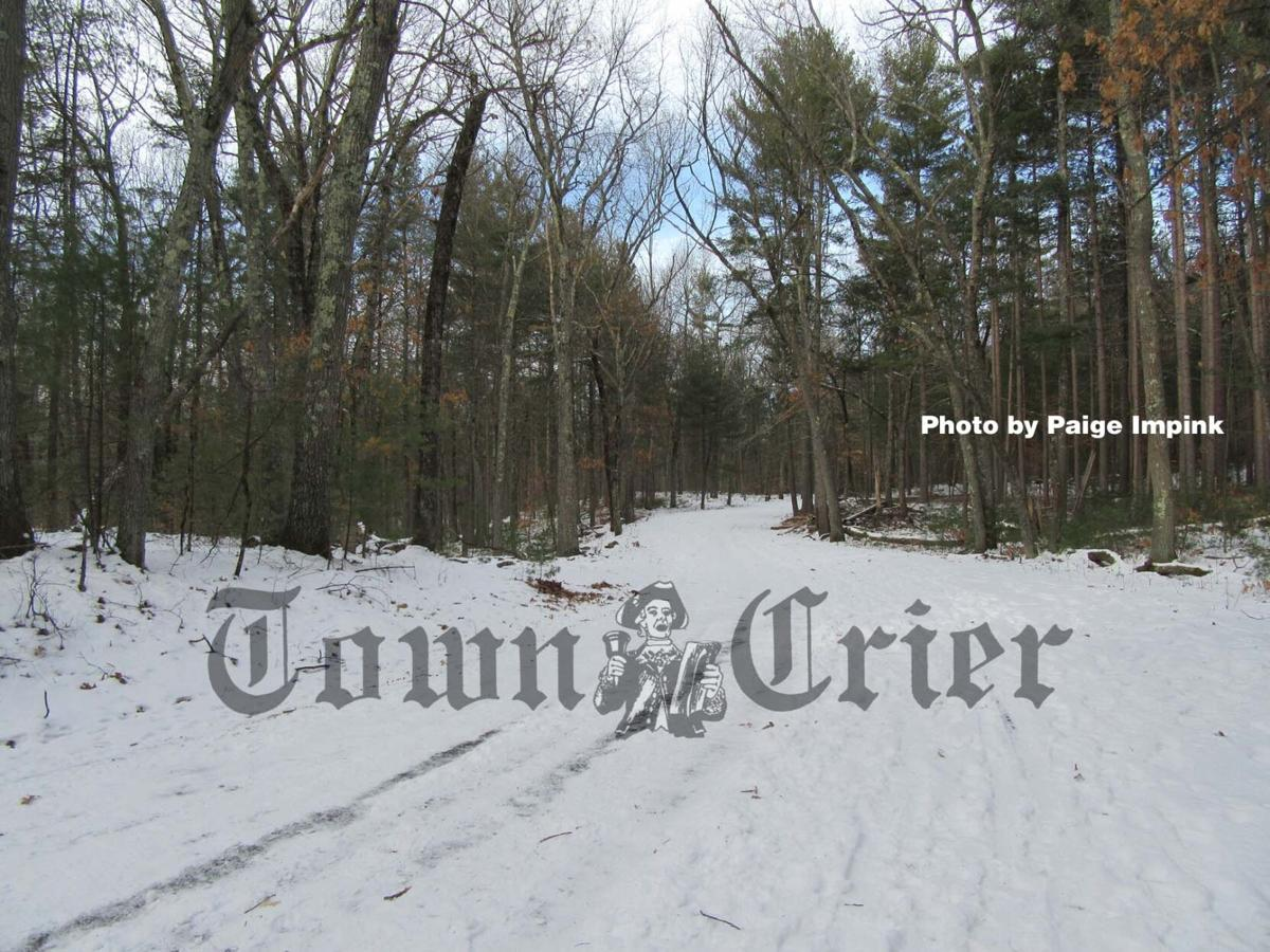 Lowell-Dracut-Tyngsborough State Forest