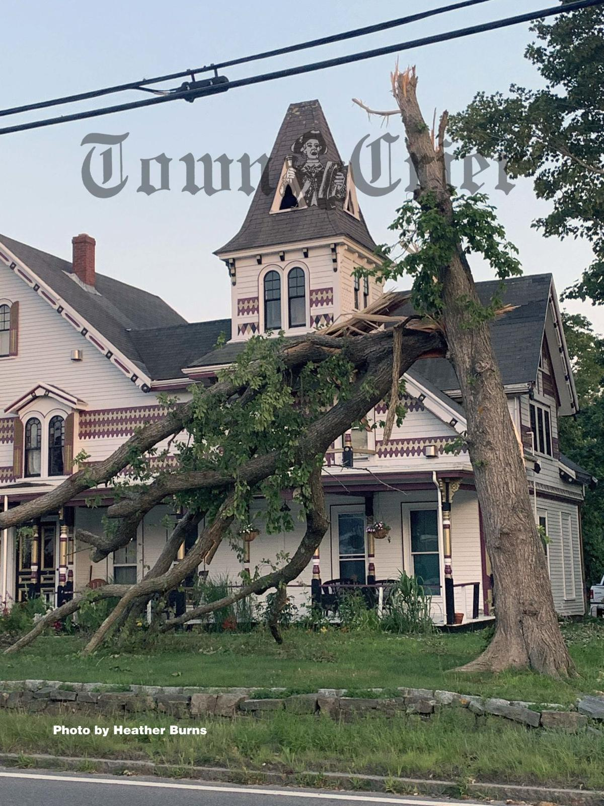 Tree damage in Dennis