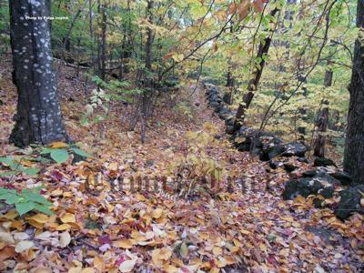 Beautiful fall color at North Pack Monadnock