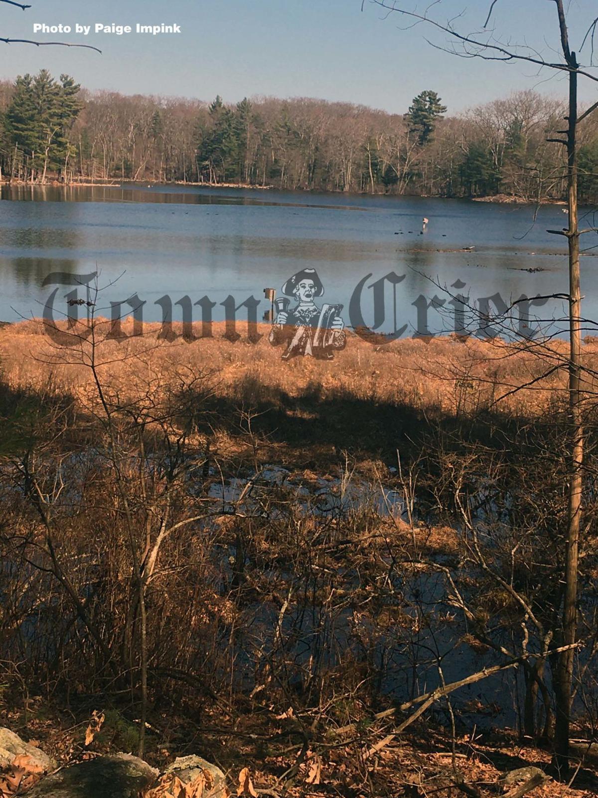 Mink Pond  in Concord's Estabrook Woods