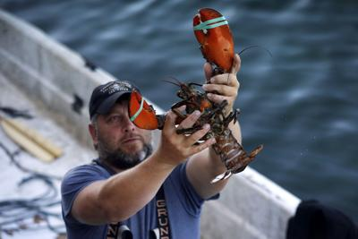 Lobster Catch China