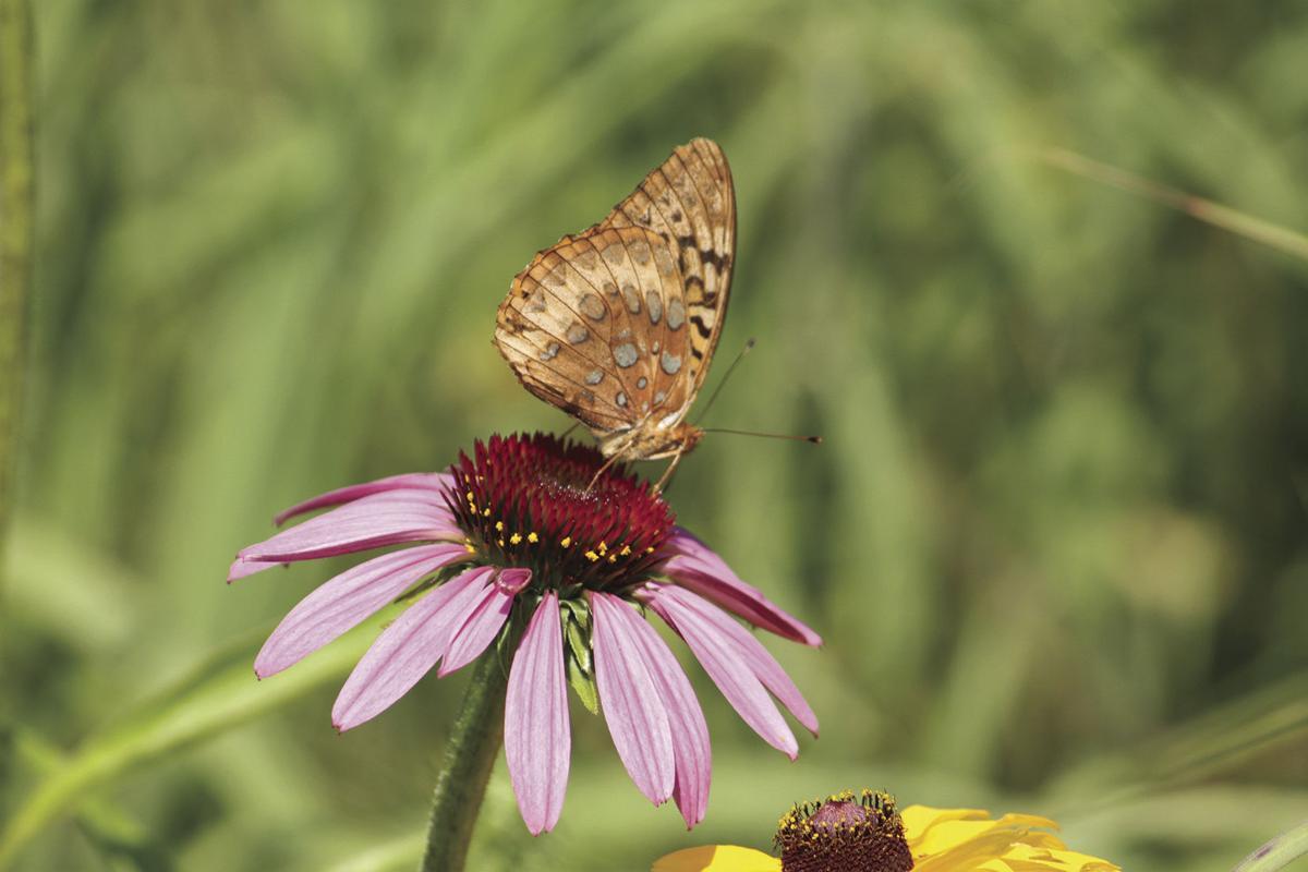 Pollinator will lead to more habitat