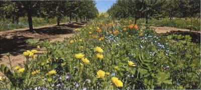 Pollinator strip