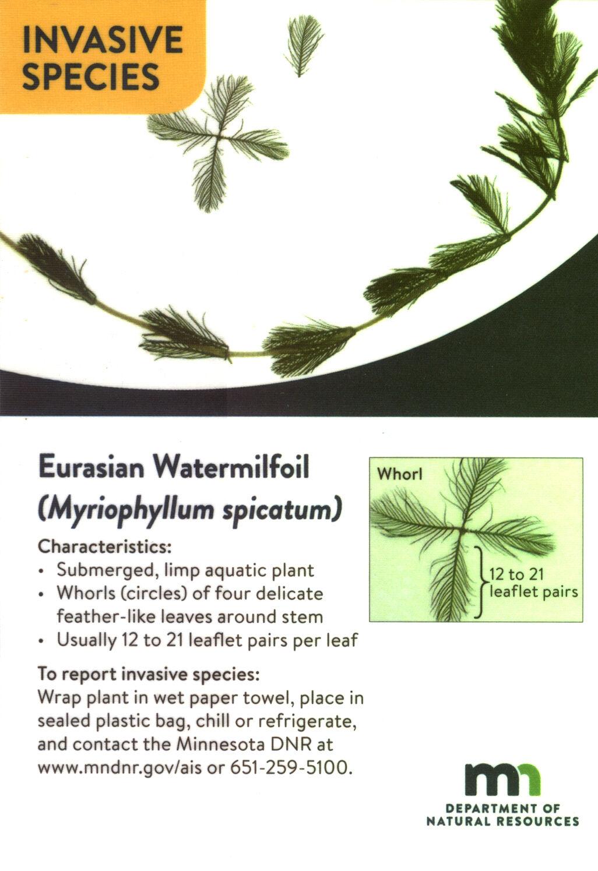Eurasian Watermilfoil ID card.jpg