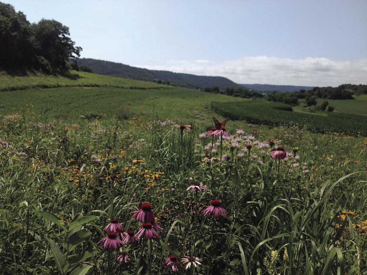 Plants providing habitat