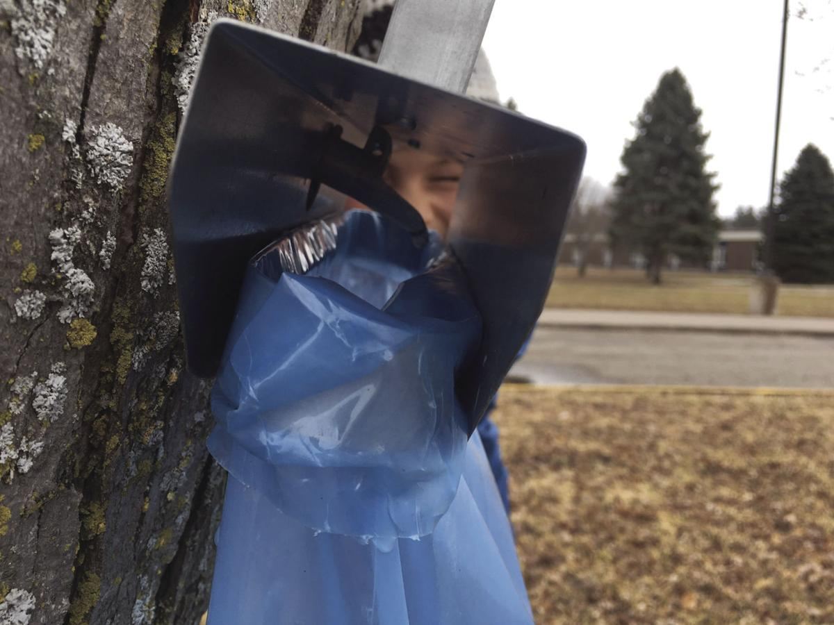 Maple sap drips into a bag at the Stillwater Middle School.jpg