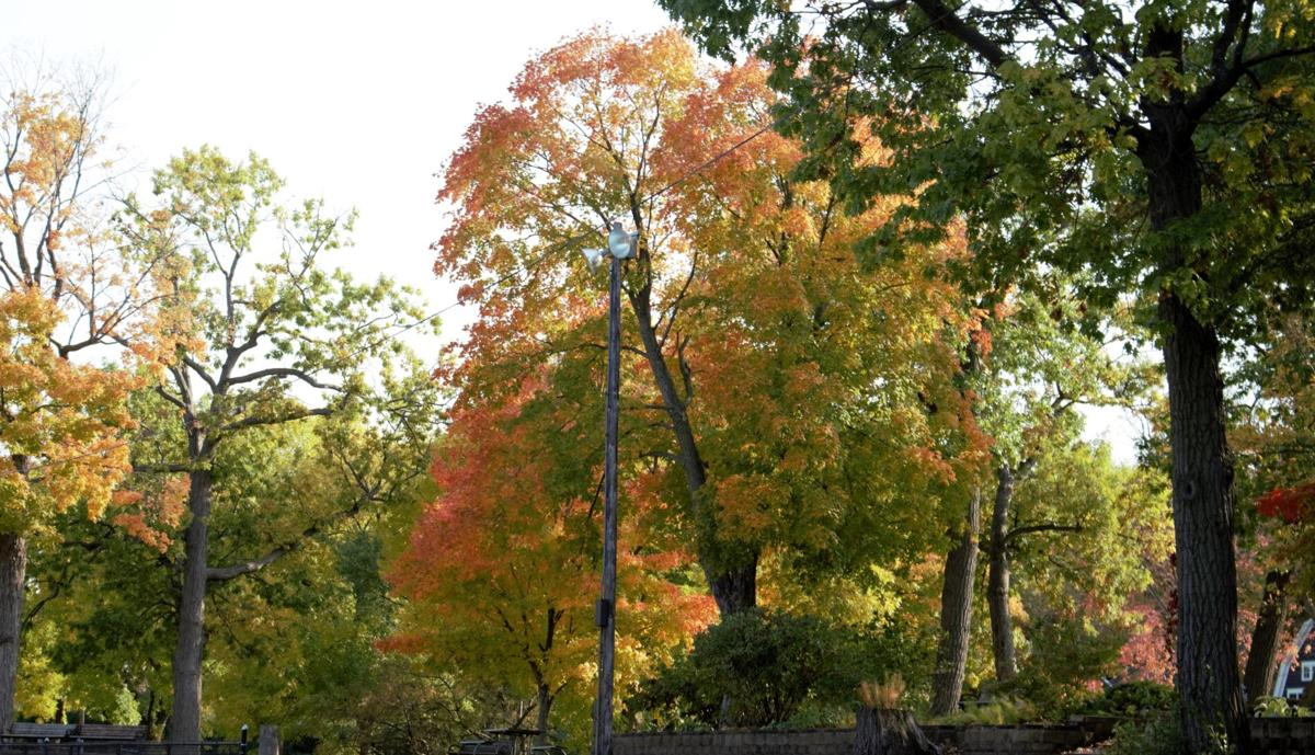 Fall colors are appearing in Excelsior