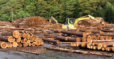 DNR opens public comment period on draft sustainable timber harvest analysis