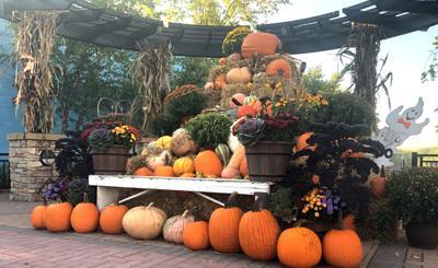 downtown pumpkins