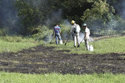 Palmer amaranth found in Houston County