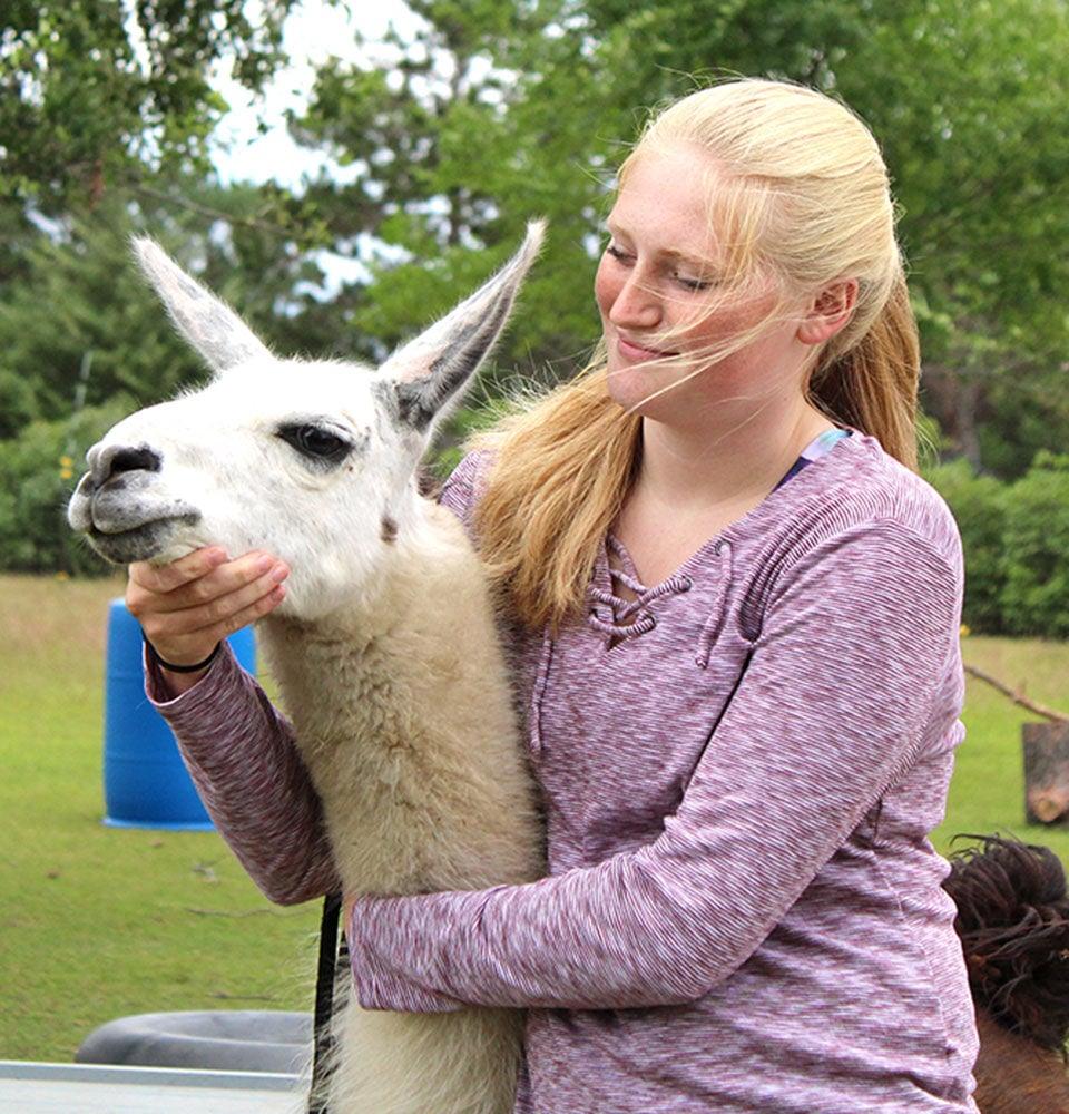 Royalton sisters show llamas virtually