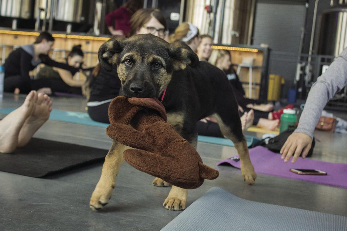FR puppy yoga 1 cmyk.jpg