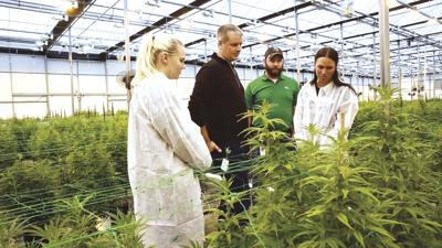 MinnMed first in state to offer cannabis distillates