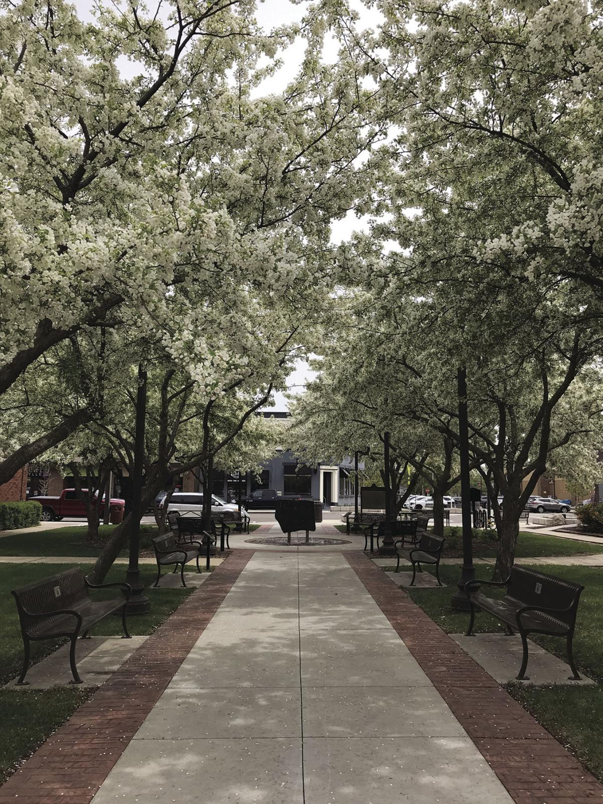 lv downtown trees c.jpg
