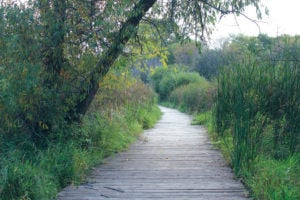 Three Rivers Park District to enter into partnership with MAC Wildlife Area to restore boardwalks