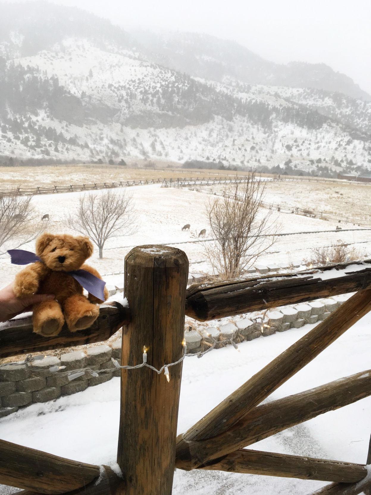 Mainstreams bear Erik's Ranch.jpg