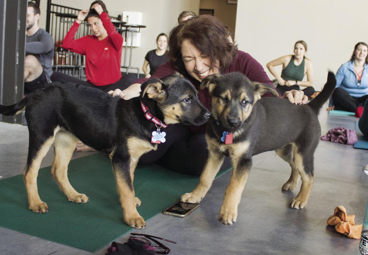 FR puppy yoga 9 cmyk.jpg