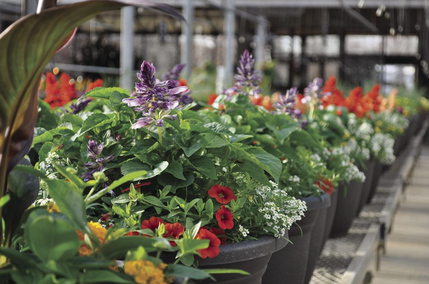 Spring Home Improevment: Maple Grove nursery, greenhouse sees increase in customers