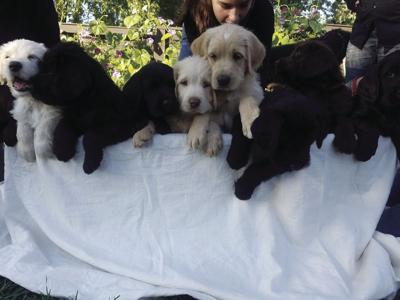 Poppy's puppies social: St. Michael resident opens backyard for puppy fun